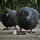 Будьте добры, покормите птиц!