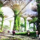 Гигантский проект сада из солнечных деревьев