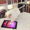 Кошка Карла Лагерфельда снялась для i-D