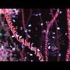 """Клип Бьорк на песню """"Hollow"""" из её нового альбома """"Biophilia"""""""