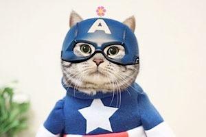 Котик косплеит супергероев