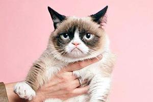 Grumpy Cat снялась в рекламе быстрых завтраков