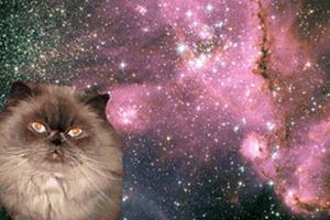 Котировка сайтов: Как заполнить любой сайт мигающими котами