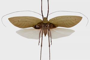 Подкаст LAM: Инопланетяне, насекомые и «Багровый пик»