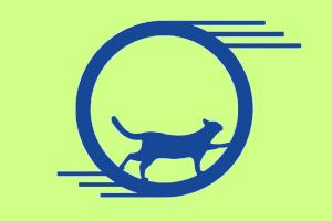 На Kickstarter собрали деньги на тренажёр для кошек