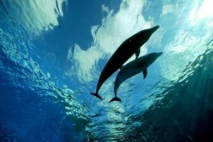 Дельфины любят Radiohead