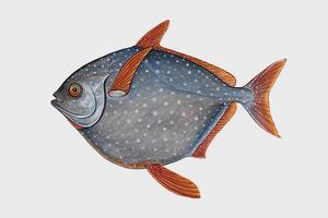 Обнаружена первая в мире теплокровная рыба