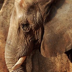 Что чувствуют животные и есть ли  у них эмоции