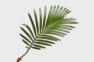 Учёные подсчитали и показали число деревьев на Земле