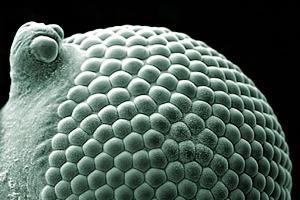 Wellcome Image Awards назвал лучшие научные фотографии 2015 года