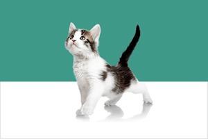 Девайс Kittyo позволит играть с котом, находясь вне дома