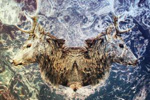 Премьера альбома: Сибирская электроника Nocow & Hmot «Lost In Taiga»