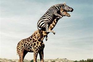 В мире животных: Герои «Мадагаскара» в мемах, рекламе и видеороликах