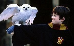Итоги десятилетия: Гарри Поттер и Дары счастья