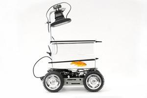 Рыбки смогут управлять роботизированным аквариумом