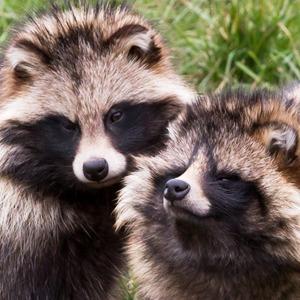 Эпоха истребления: 7 разновидностей животных, которых собрались уничтожить