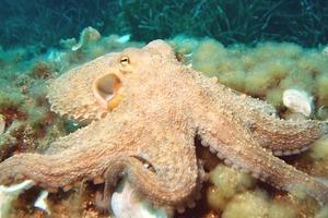 Головоломка на выходные: разноцветные осьминоги