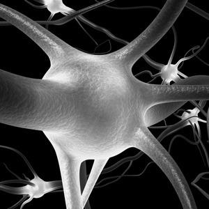 За логику и творчество отвечают разные полушария мозга?