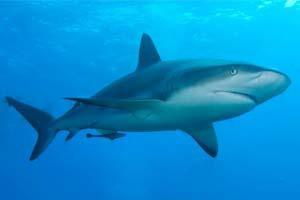 Twitter спасает австралийцев от акул