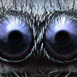 Что не видит глаз: Лучшие микроскопические фотографии этого года