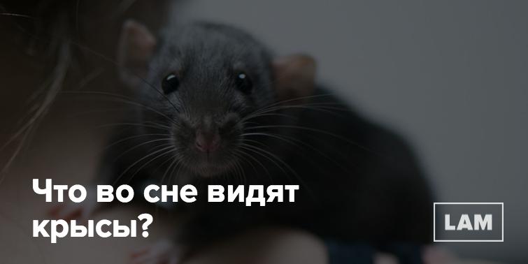 Приснилась крыса беременной