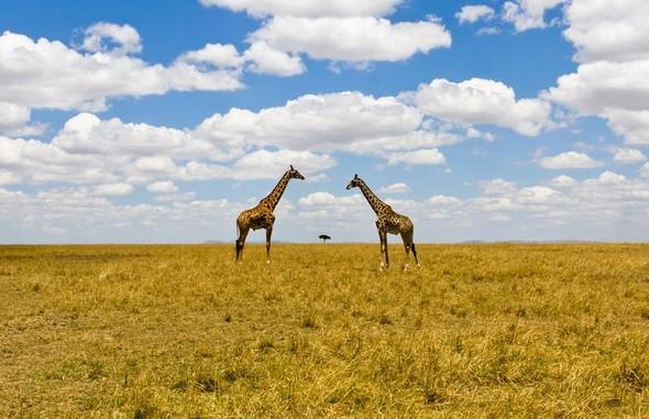Фотоконкурс National Geographic 2010. Изображение № 45.