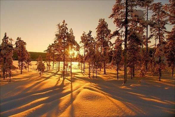 Изображение 19. Выходные в шведском лесу.. Изображение № 19.