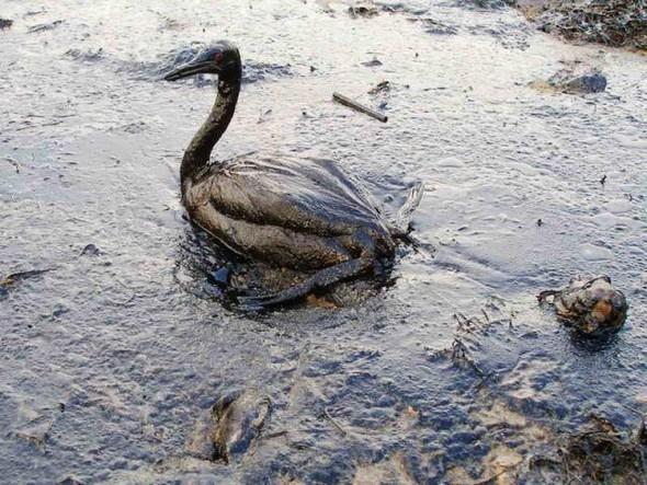 Крупнейшая экологическая катастрофа!. Изображение № 6.