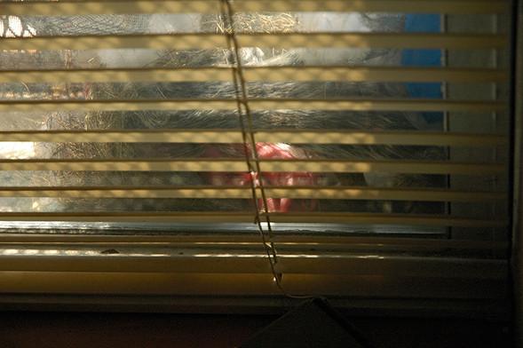 Белка в нашем окне. Изображение № 1.