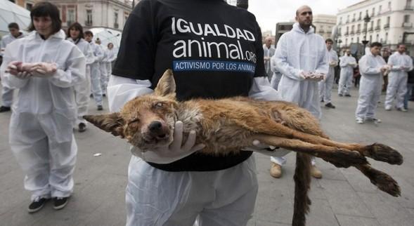 Неугомонные защитники животных. Изображение № 6.