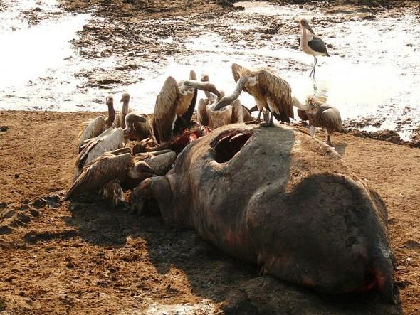 Бегемотово царство. Танзания. Изображение № 6.