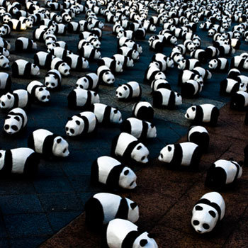 Панды вгороде. Изображение № 1.