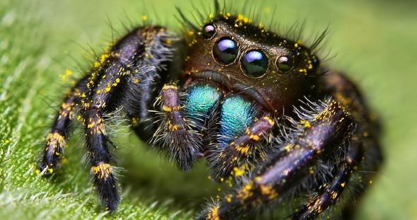Лучшие новые снимки от National Geographic. Изображение № 24.