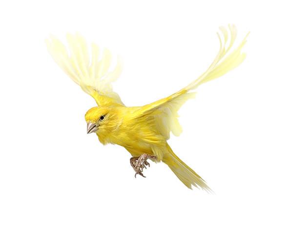 Божественные птицы Andrew Zuckerman. Изображение № 11.