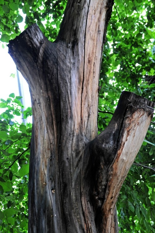 Treefilia. Изображение № 19.