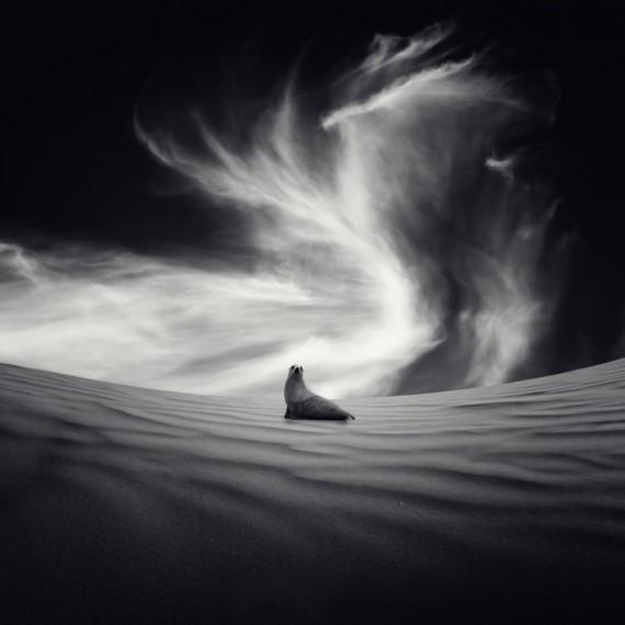 Luis beltran. красота снов. Изображение № 25.