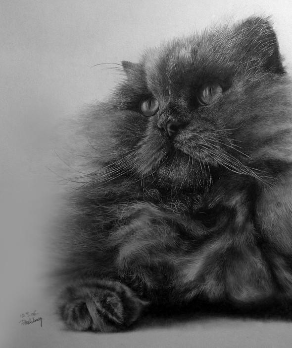 Paullung.и его коты. Изображение № 18.