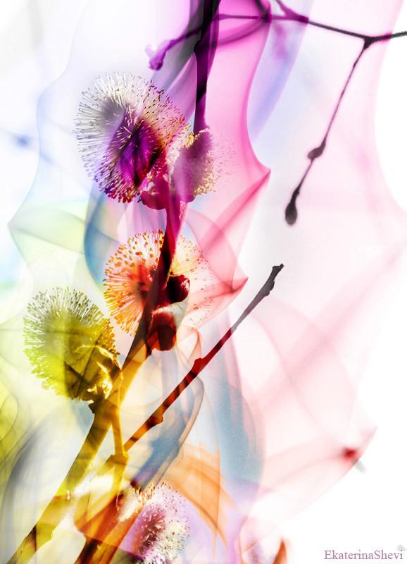 Время цветения. Изображение № 13.