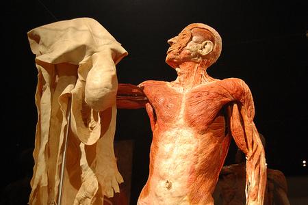 Gunther vоnHagen иего выставка «Мир Тела». Изображение № 5.