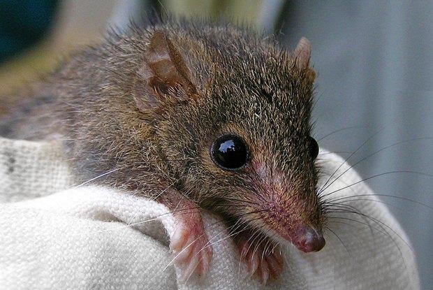 Как учёные находят новых животных: 10 недавно открытых видов. Изображение № 9.