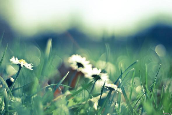 Весна идет! Создаем весеннее настроение. Изображение № 14.