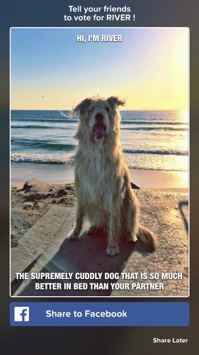 Buzzfeed выпустил Tinder для животных . Изображение № 4.