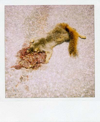 Animals Dead. Изображение № 2.