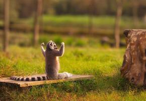 В мире животных: Герои «Мадагаскара» в мемах, рекламе и видеороликах. Изображение № 81.