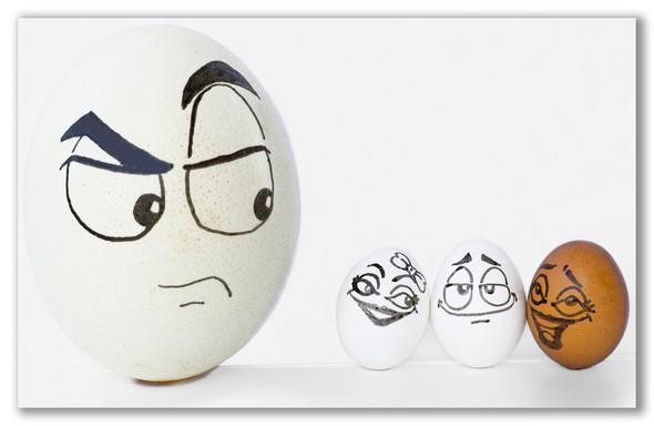Удивительная жизнь яиц. Изображение № 11.