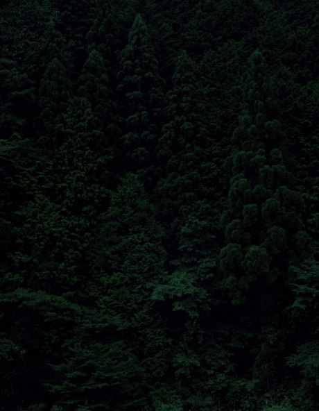 Темный лесКейты Сигиуры. Изображение № 2.