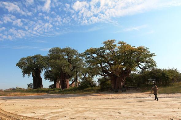 Остров баобабов в Ботсване. Изображение № 7.