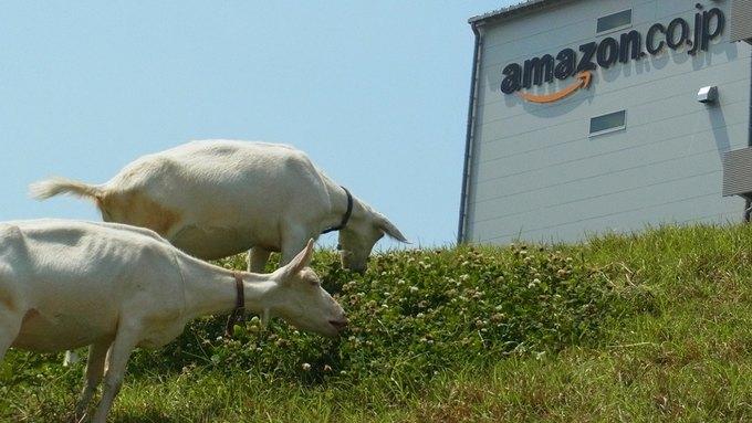 В японском Amazon работают настоящие козы . Изображение № 1.