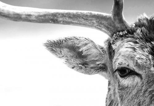 ФОТОГРАФИИ ДИКИХ ЖИВОТНЫХ НА КОНКУРСЕ BRITISH WILDLIFE PHOTOGRAPHY. Изображение № 14.