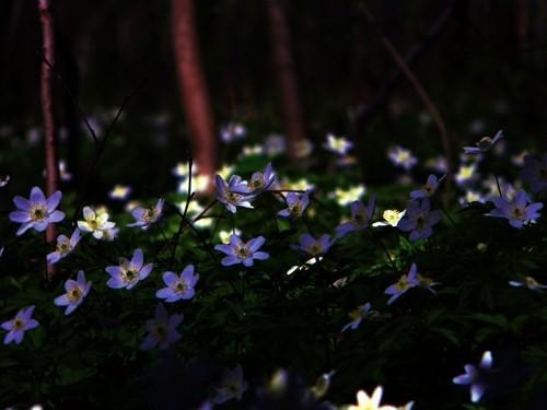 Весна в лесу. Изображение № 7.